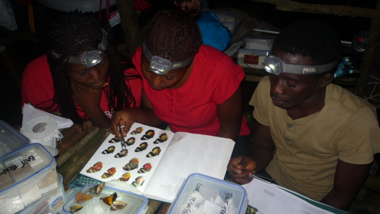 Jennifer, Mercy and Kobe (from left) identifying butterflies on slopes of Mt. Cameroon