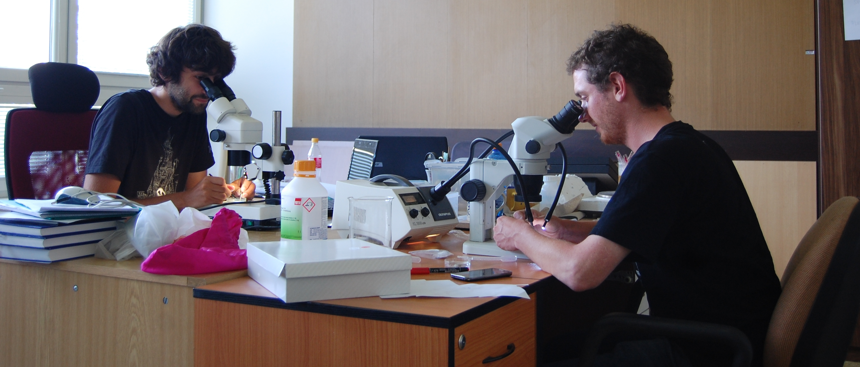 Sylvain and Vincent during identification of the last moths